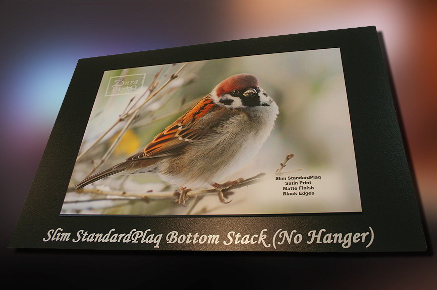 standard_backer